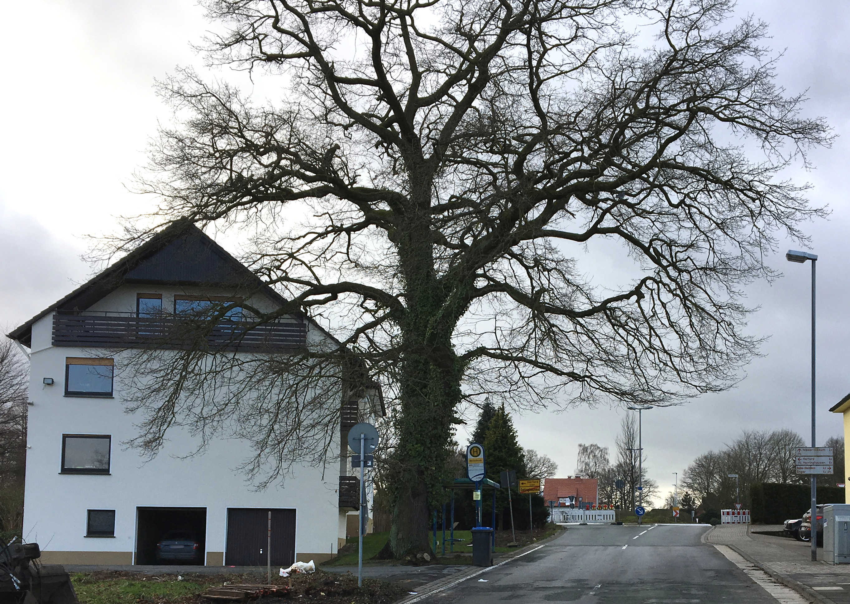 Alte Eiche Birkenstraße