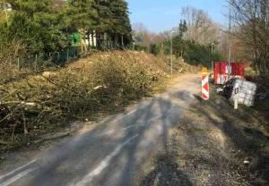Baumfällarbeiten Birkenstraße
