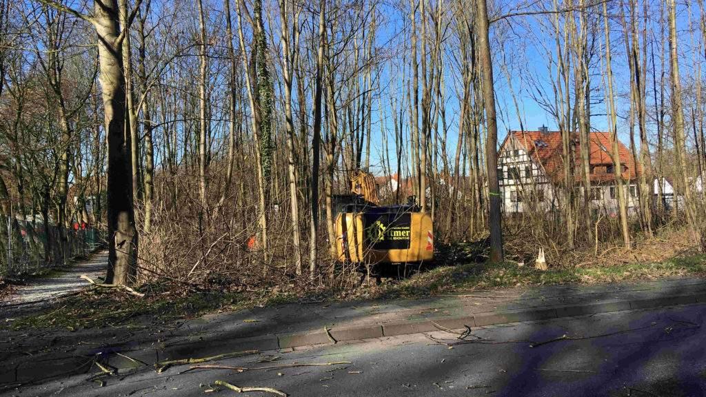 Baumfällarbeiten Maschstraße